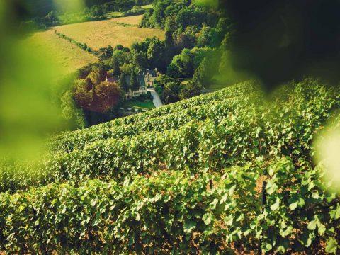Maximin Grunhaus Winery Estate