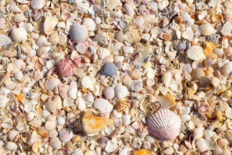 The beaches of Captiva Island, Florida, are known for their wide array of seashells that come in all shapes and sizes.