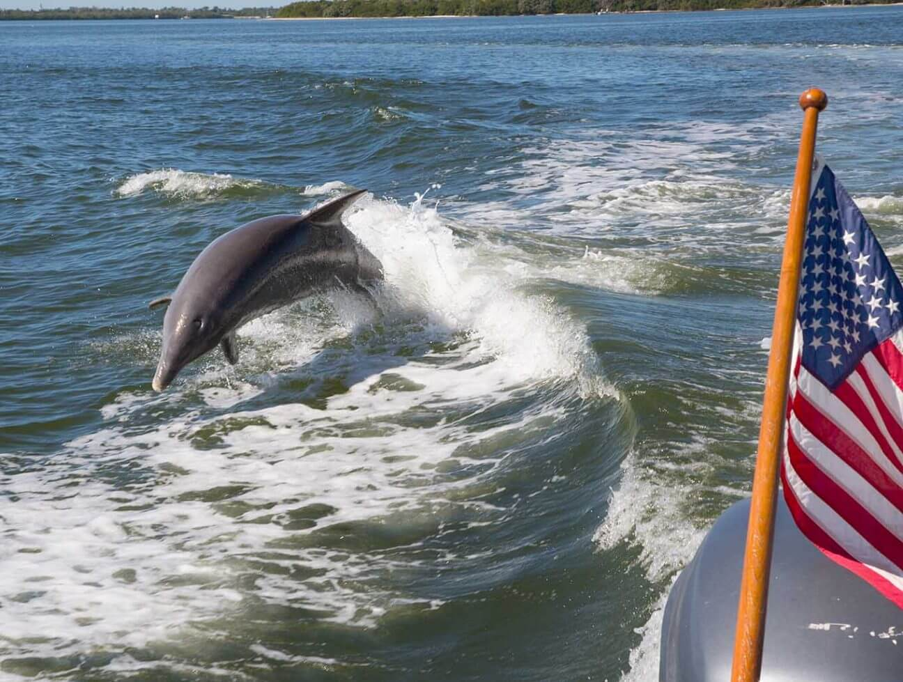 Dolphin playfully jumping out of the water as it follows a boat